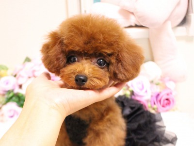 7月1日生まれ  女の子  タイニー小さめ  レッド04