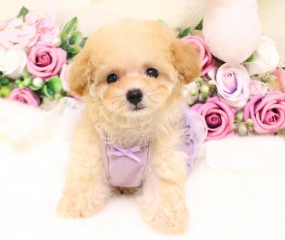 9月5日生まれ♡  クリーム  女の子  ティーカップ01