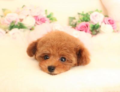 11月19日生まれのプリンセス♡  2キロ前後予想02