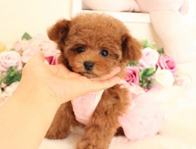 11月19日生まれのプリンセス♡  2キロ前後予想01