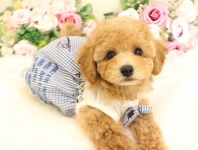 1月7日生まれ  アプリの男の子 タイニー大きめ03