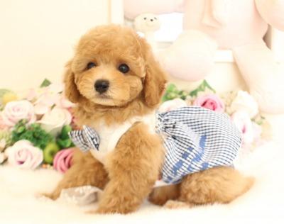 1月7日生まれ  アプリの男の子 タイニー大きめ01