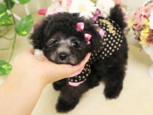タイニー小さめ  シルバー  女の子  3月18日生まれ01