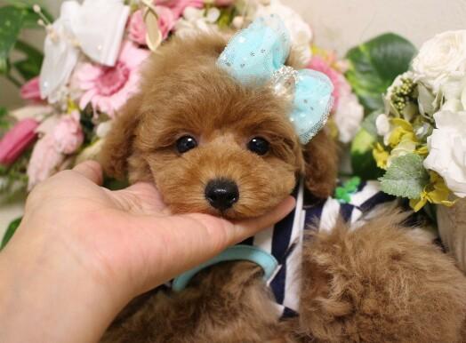 1月23日生まれ  男の子  タイニー小さめ予想01