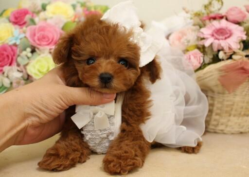 2月3日生まれ  ティーカップ プリンセス01