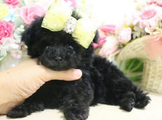 3月20日生まれ  ブラック オス  極小02