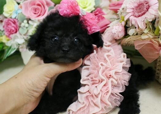 3月20日生まれ  ブラック  女の子01