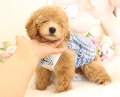 1月7日生まれ  アプリの男の子 タイニー大きめ04