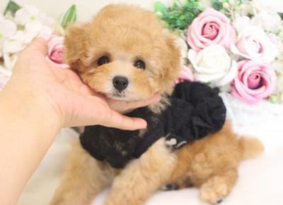 ティナ子 7月18日生まれ 男の子 小ぶりちゃん02