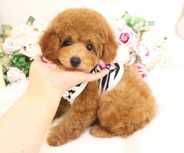 6月9日生まれ  タイニー大きめ予想01