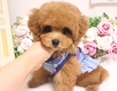 8月10日生まれの女の子  レッド  タイニー小さめ  ほたる03