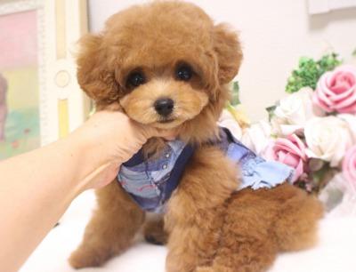 8月10日生まれの女の子  レッド  タイニー小さめ  ほたる04
