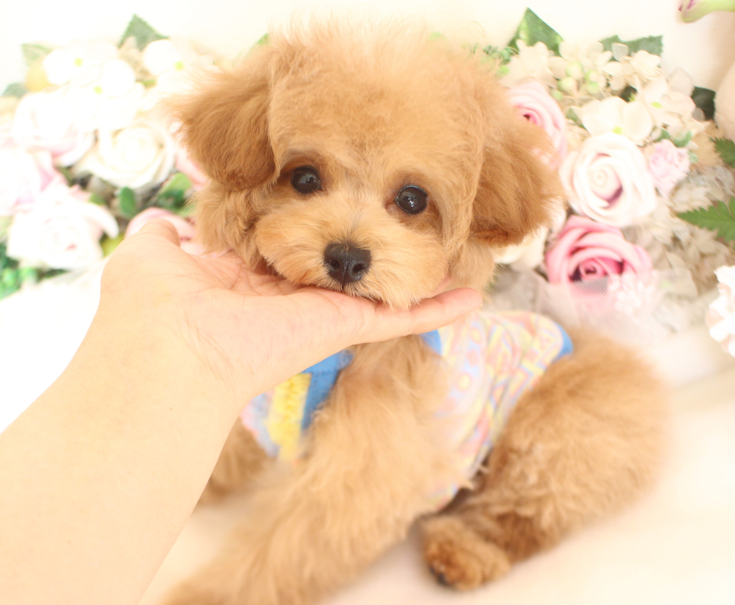 9月8日生まれ  男の子  タイニー小さめ01