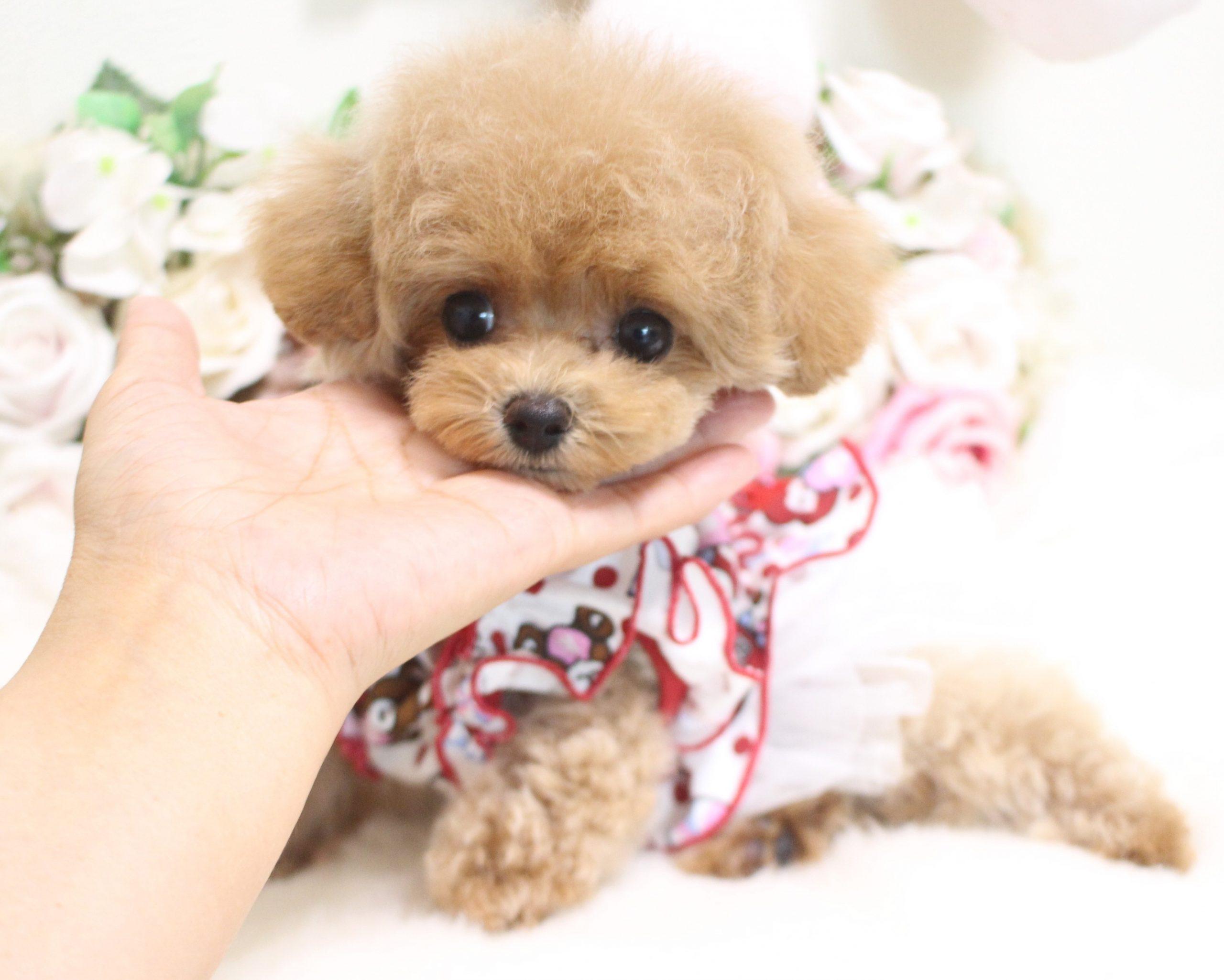 6月16日生まれの女の子  ティーカップ予想♡03