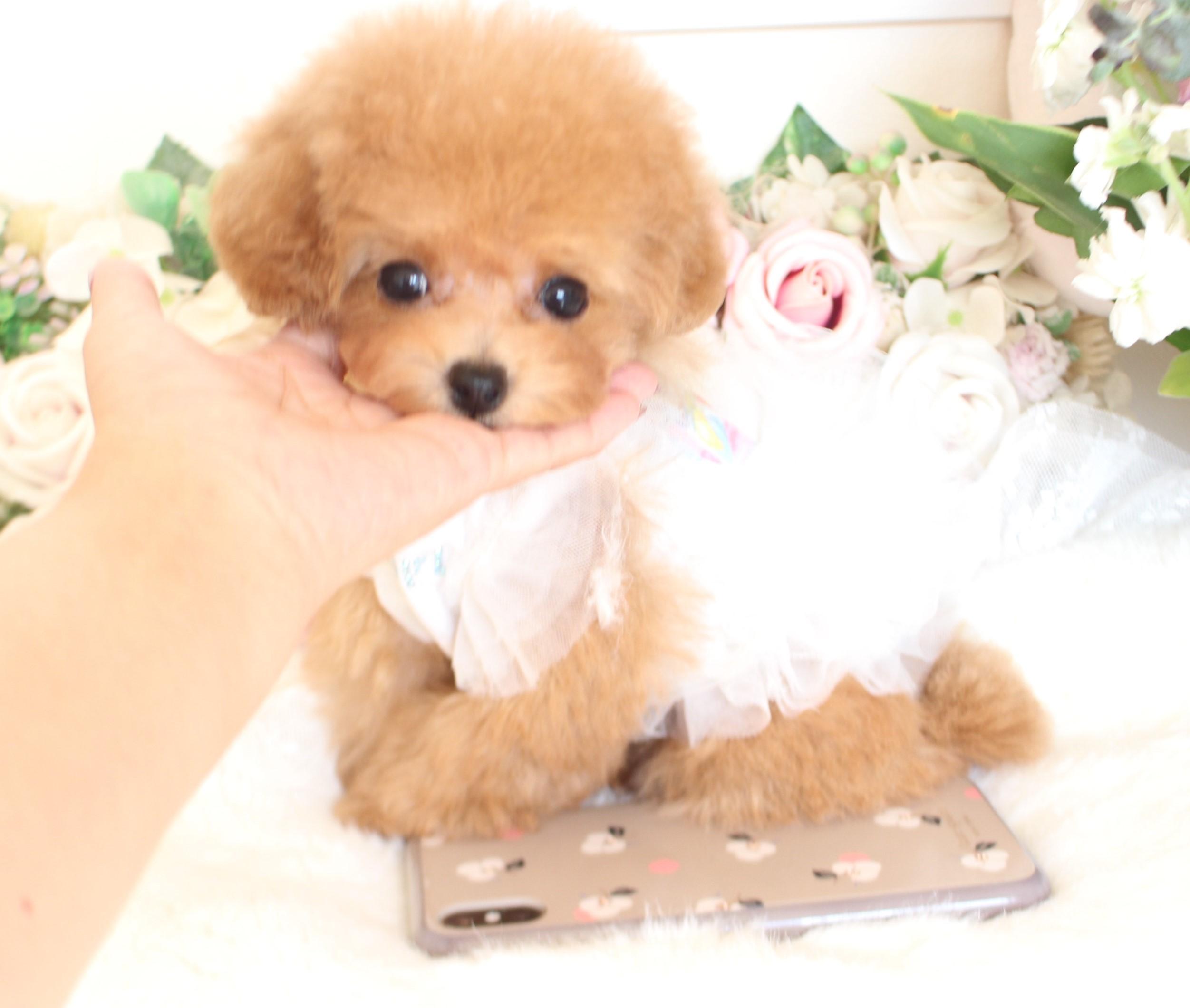 ティーカップ小さめ予想の女の子♡8月27日生まれ♡04