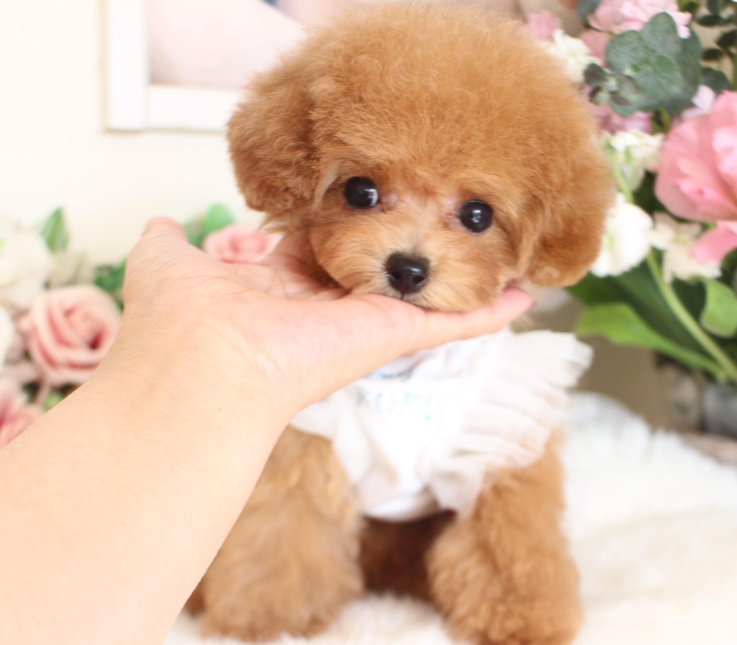 ティーカップ小さめ予想の女の子♡8月27日生まれ♡03