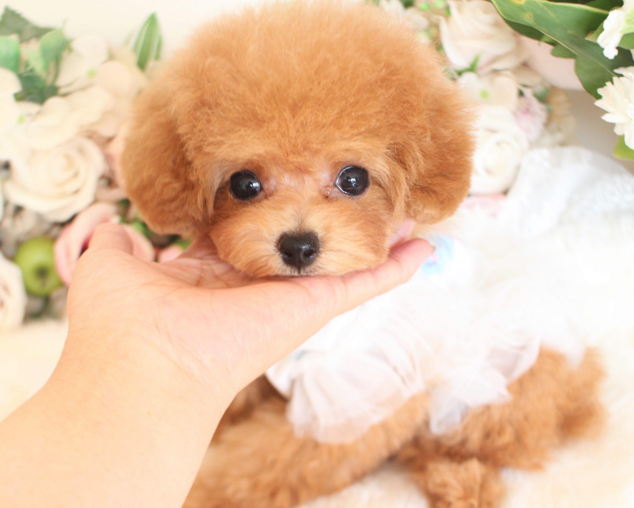ティーカップ小さめ予想の女の子♡8月27日生まれ♡01