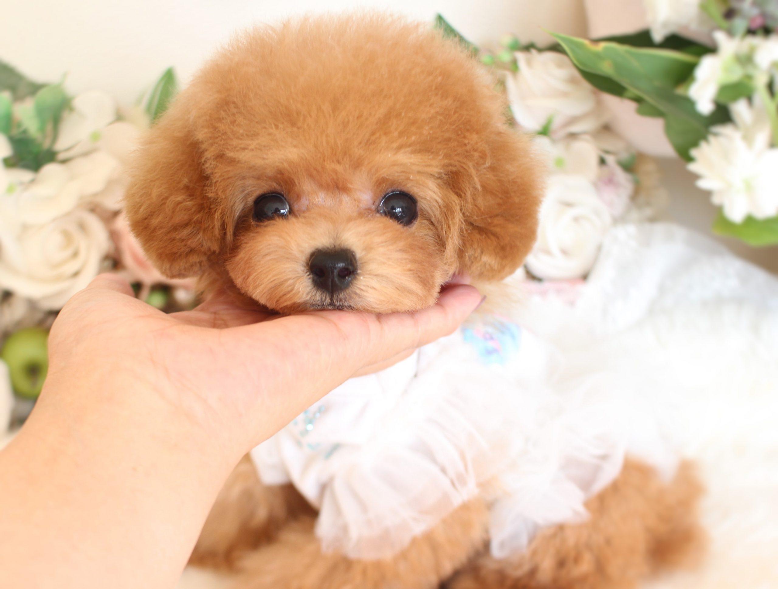 ティーカップ小さめ予想の女の子♡8月27日生まれ♡02