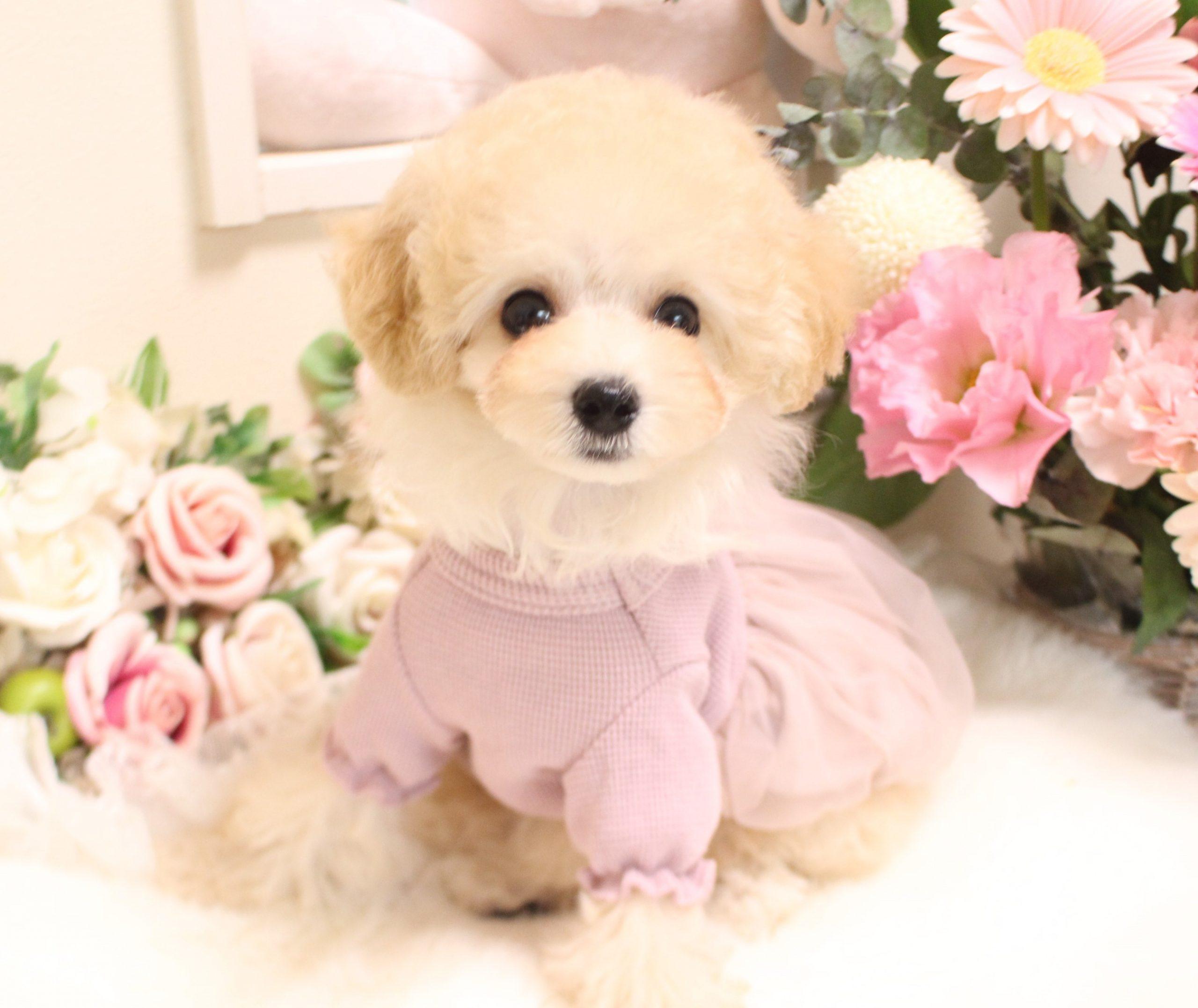 9月14日生まれの女の子  タイニー小さめ予想01