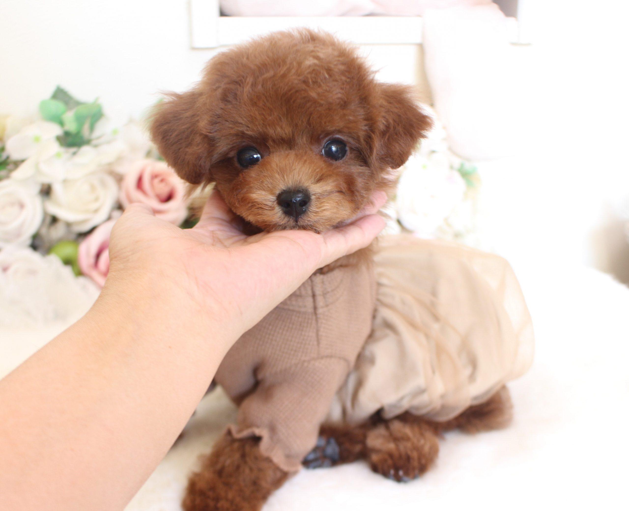 10月25日生まれ  ふくべびー  男の子 レッド01