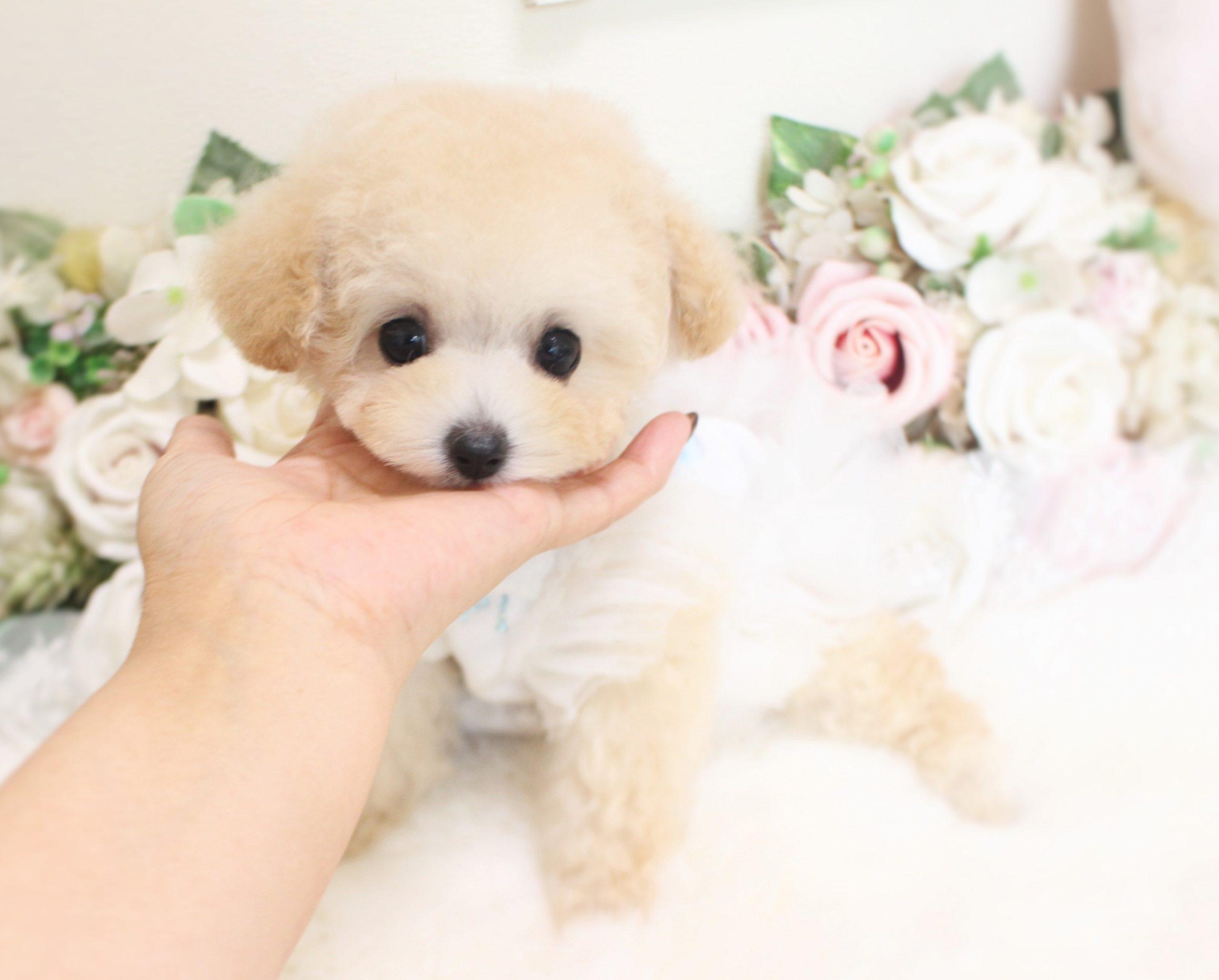 11月15日生まれの女の子 マイクロ予想♡ こはくべびー01