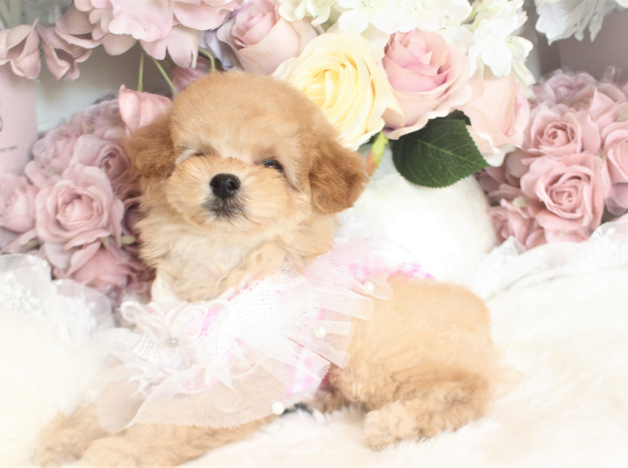 7月17日生まれ女の子 クリーム  ティーカップ04