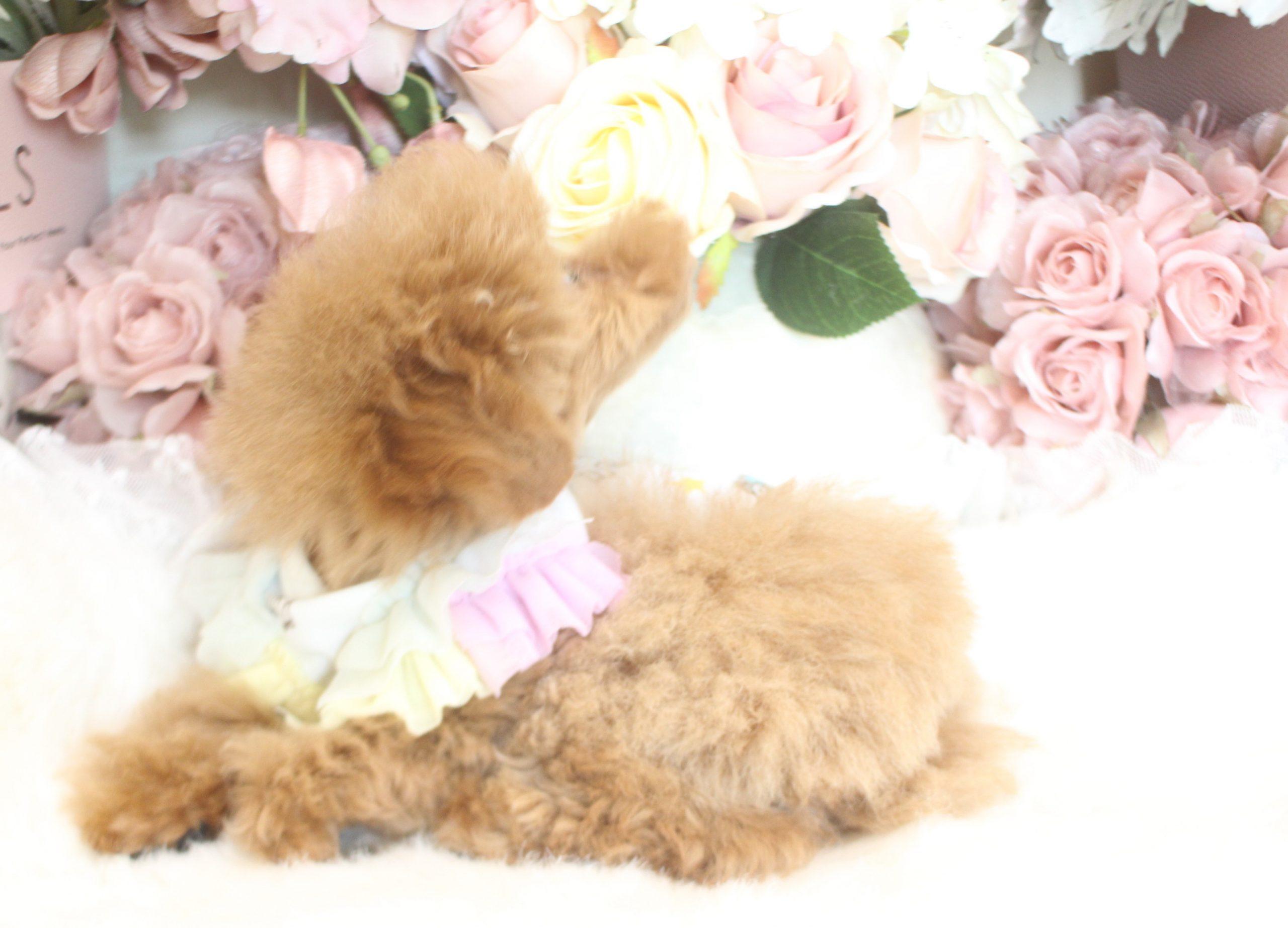 7月15日生まれ  ウェンディ 女の子04