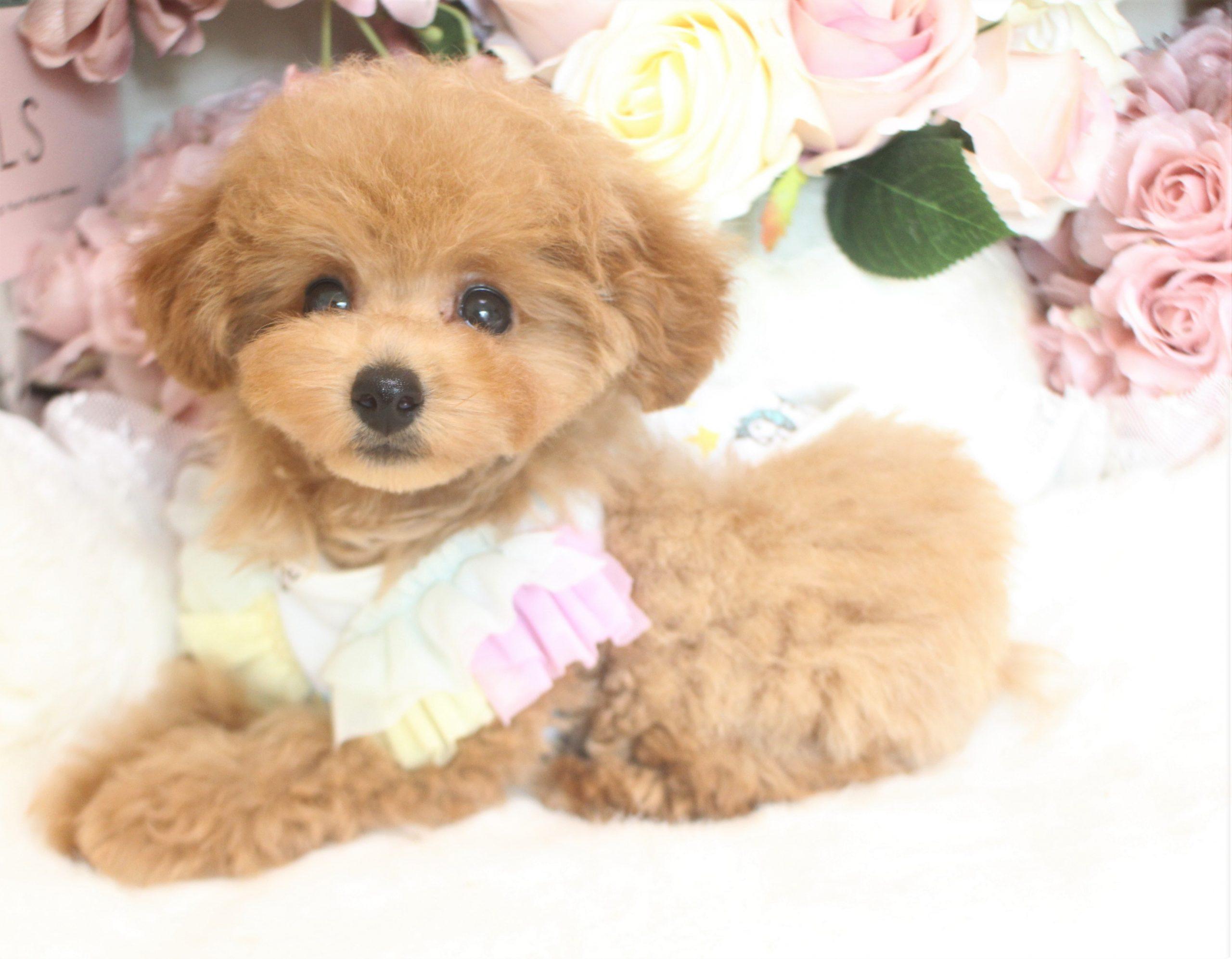 7月15日生まれ  ウェンディ 女の子02