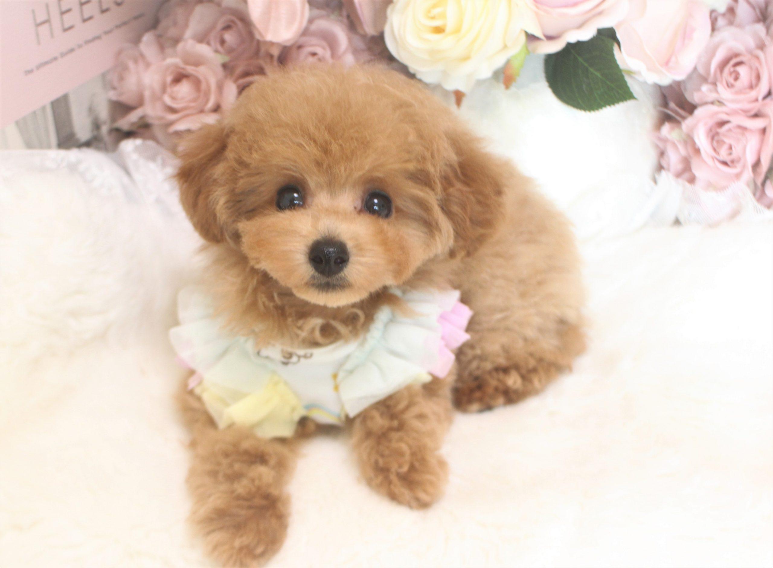 7月15日生まれ  ウェンディ 女の子03